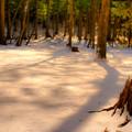 写真: 温もり感じる夕暮れの冬
