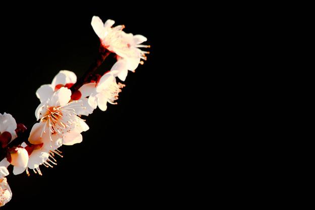 映える白い花