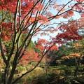 Photos: 紅葉の庭園