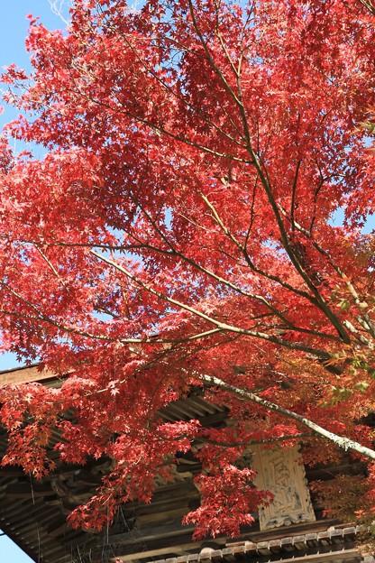 Photos: 紅葉と楼門