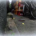路地裏の秋