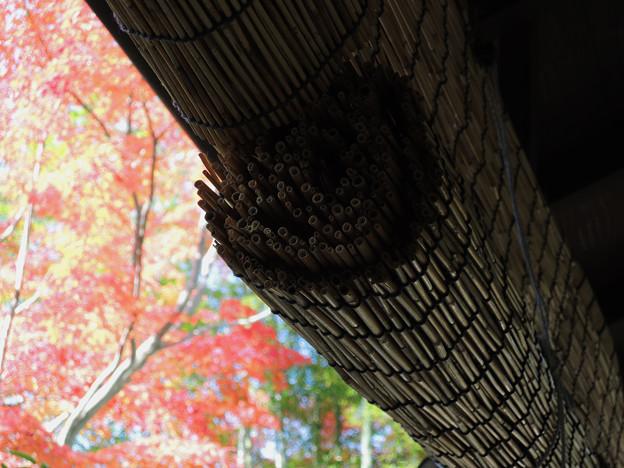 簾のむこうは秋模様