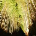 嵐山花灯路_竹林の小径