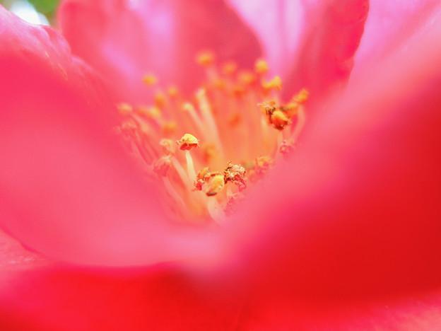写真: 冬花