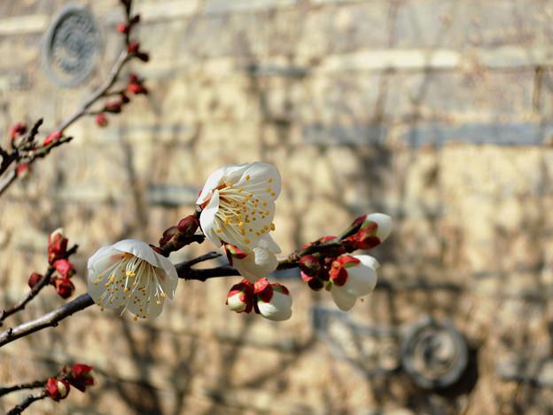 ほんのり春の香り