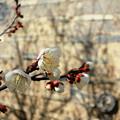 Photos: ほんのり春の香り