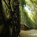 写真: 竹林を歩く