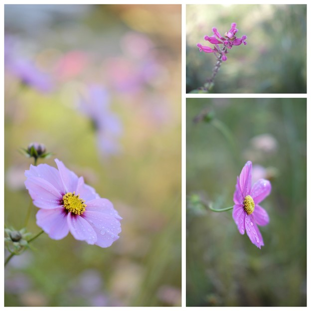 花の文化園(20161203)_xf35mm5