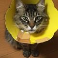 Photos: えりまき猫