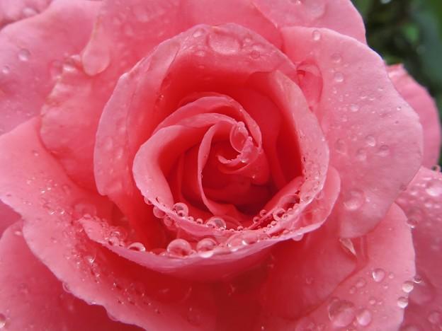 Rain&Rosa 7