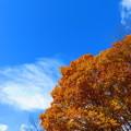 紅葉のある風景 5