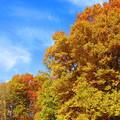 紅葉のある風景 6