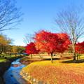 写真: 紅葉の有る風景 11