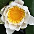 写真: 白い花がある絵 2