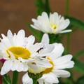 写真: 白い花がある絵 3