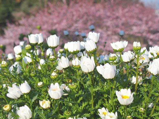 写真: 春がきた