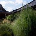 尾花の寺 道光寺