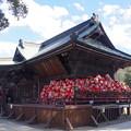 写真: 達磨寺