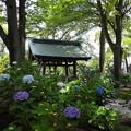 写真: あじさい神社