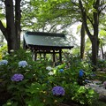 Photos: あじさい神社