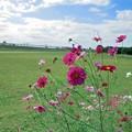 Photos: 庄内緑地公園