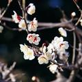 Photos: 春が来た