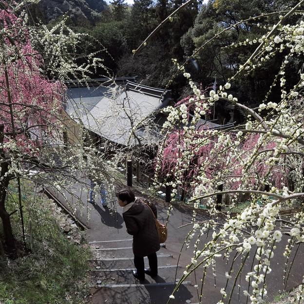 Photos: イイ匂い