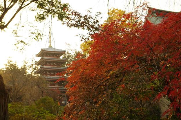 本土寺 (6)