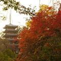 写真: 本土寺 (6)