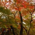 写真: 本土寺 (7)
