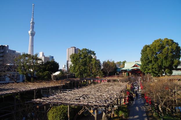 写真: 亀戸天神社 (4)