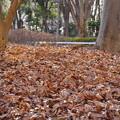 写真: 新宿中央公園_k50