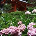 写真: 三室戸寺