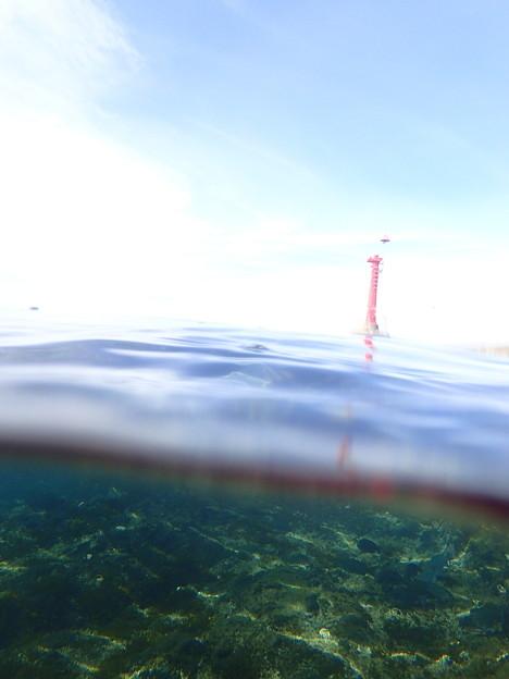 静浦の海の半水面(オリンパスTG-3顕微鏡モード@あかねマリンボウ)