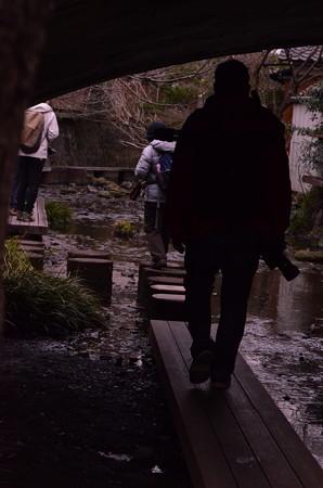 三島水辺散策撮影@あかね