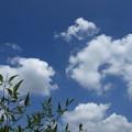 猛暑日の雲