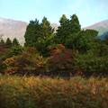 秋の金時山付近