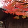 平林寺「藁葺き屋根と紅葉」