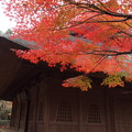 Photos: 平林寺「藁葺き屋根と紅葉」