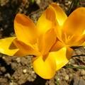 散歩道に咲く花