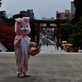 Photos: 盛岡八幡宮七五三 10