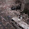 Photos: 桜の木の下で