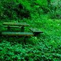 Photos: 緑に沈んだ休憩所