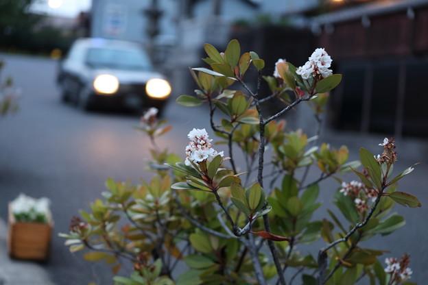 花とタクシー