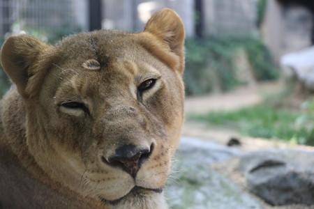 王子動物園35