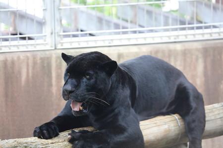 王子動物園37
