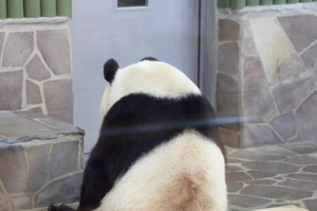 王子動物園57