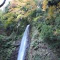 養老の滝4