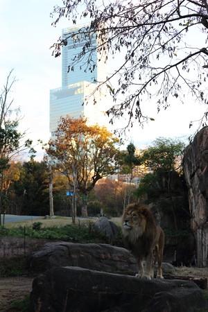 ライオンとあべのハルカス