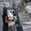 天王寺動物園17